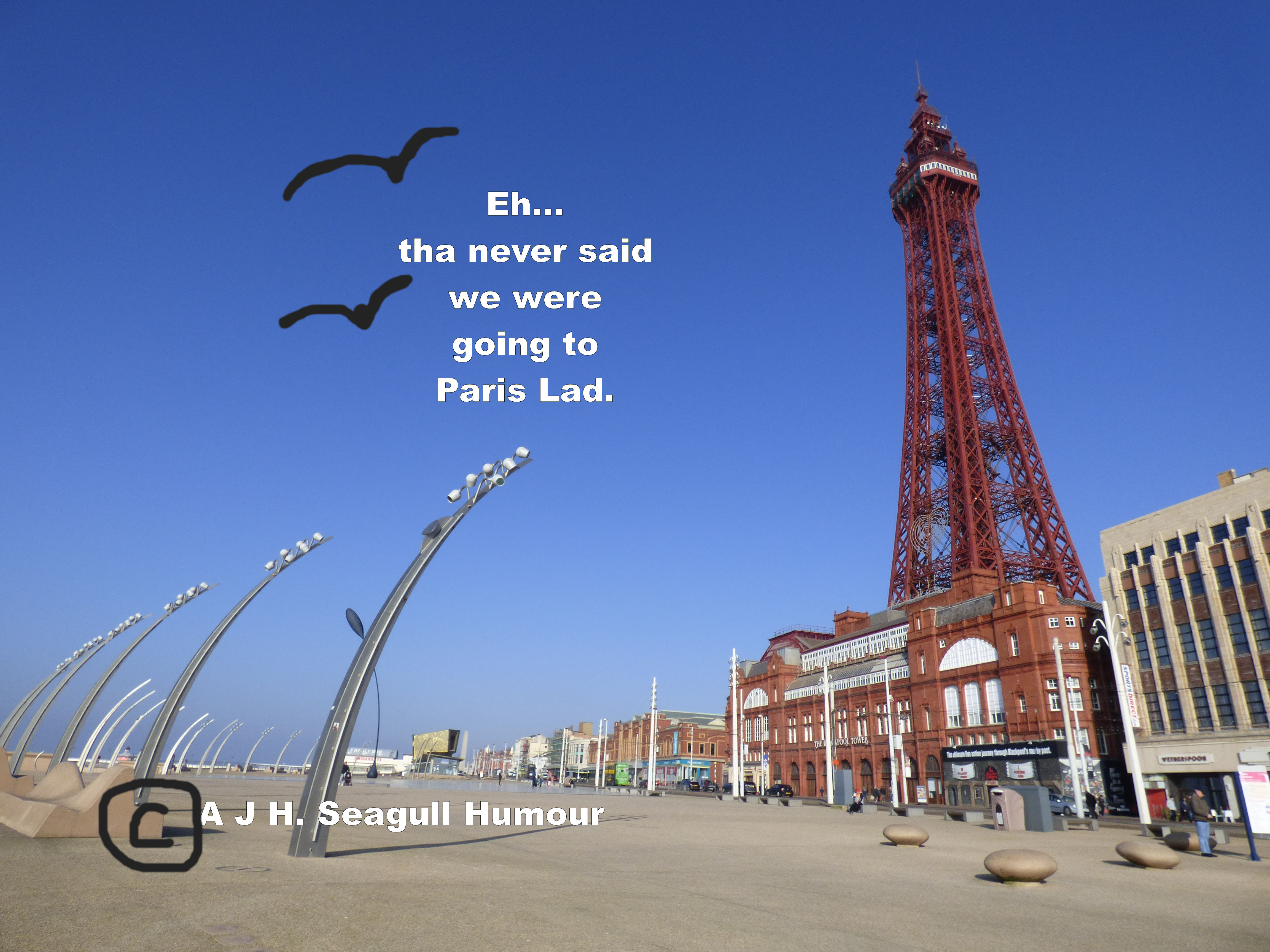 seagull humour